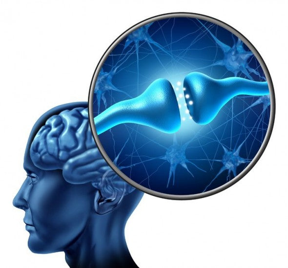 NEW RESEARCH SUPPORTS – SLEEP AND BRAIN ENERGY RESTORATION