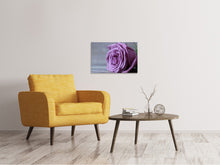 Lade das Bild in den Galerie-Viewer, Leinwandbild Rose in Lila XXL