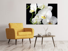Lade das Bild in den Galerie-Viewer, Leinwandbild Orchidee Close up