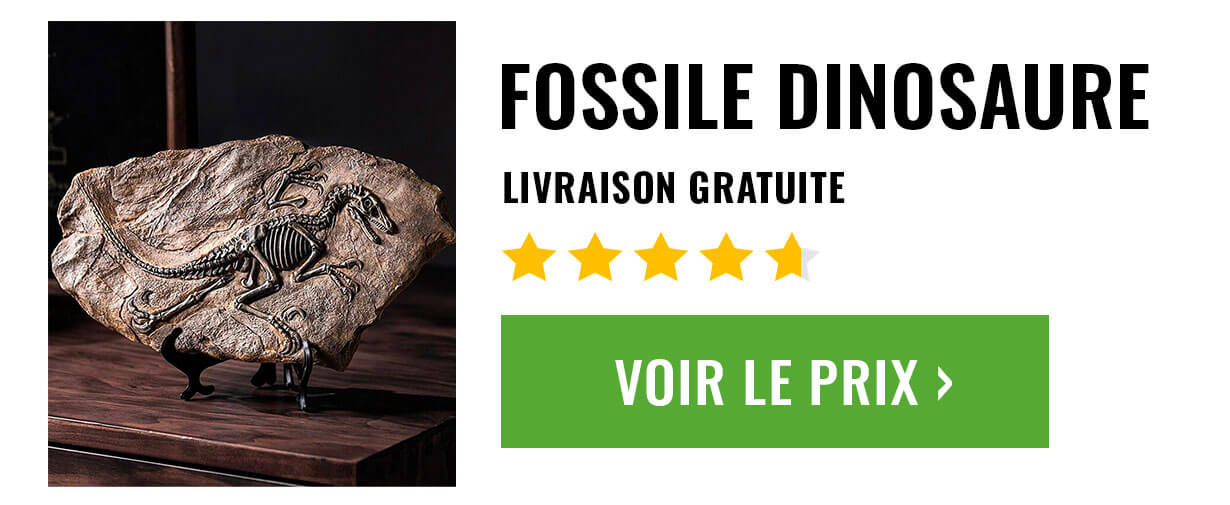 fossile dinosaure