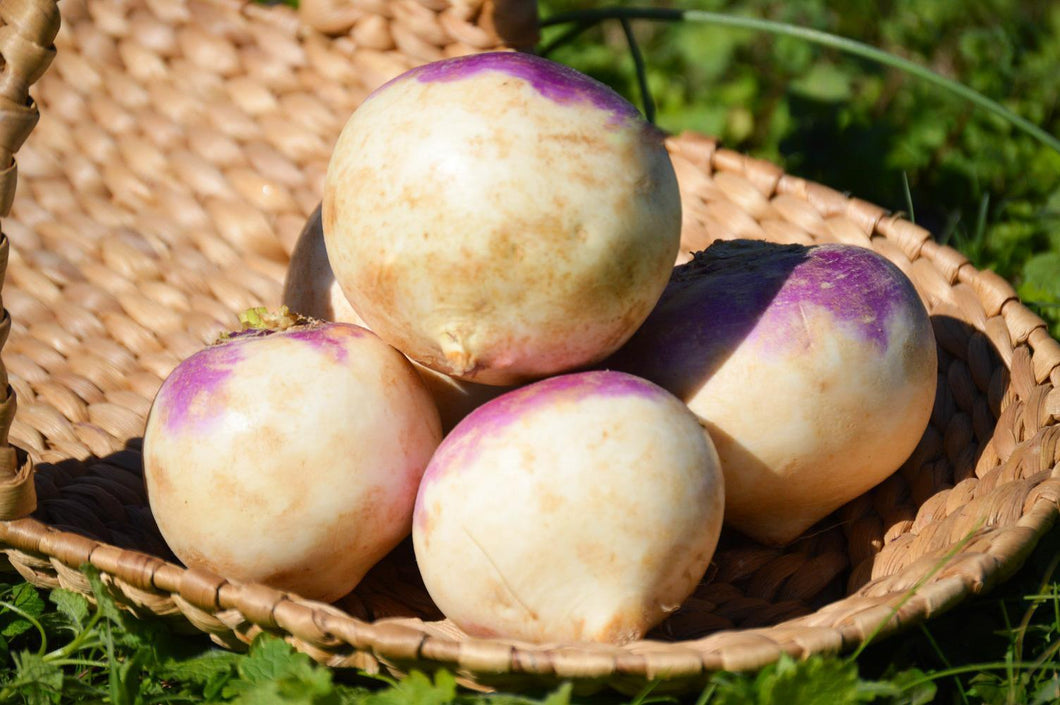 Purple Top Turnips- 1lb