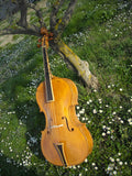 Baroque Cello Amati
