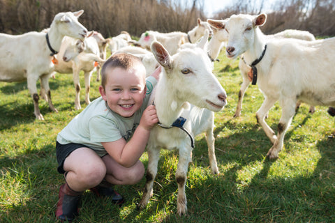 Child in goat farm