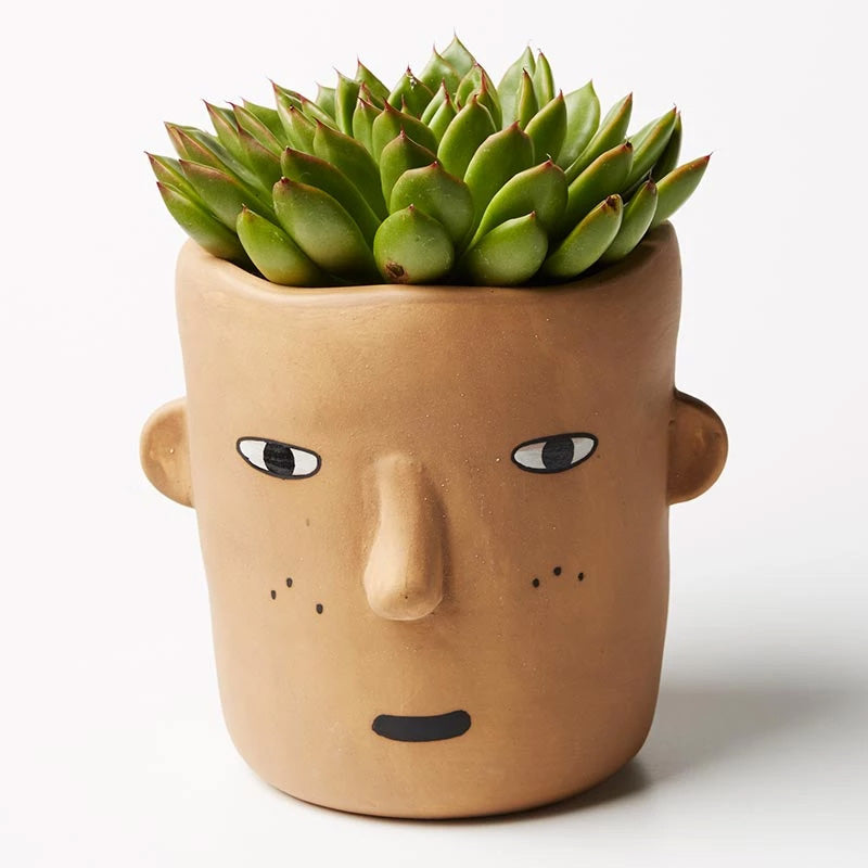 ALFIE PLANTER