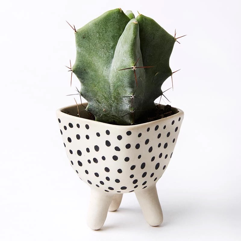 SPOTS FOOTED MINI PLANTER