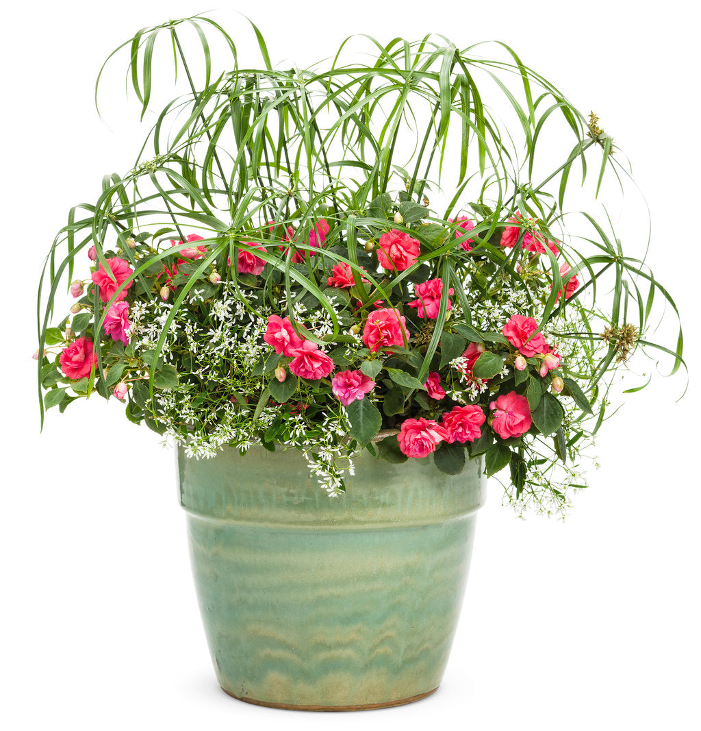 Graceful Grasses® Baby Tut® | Proven Winners