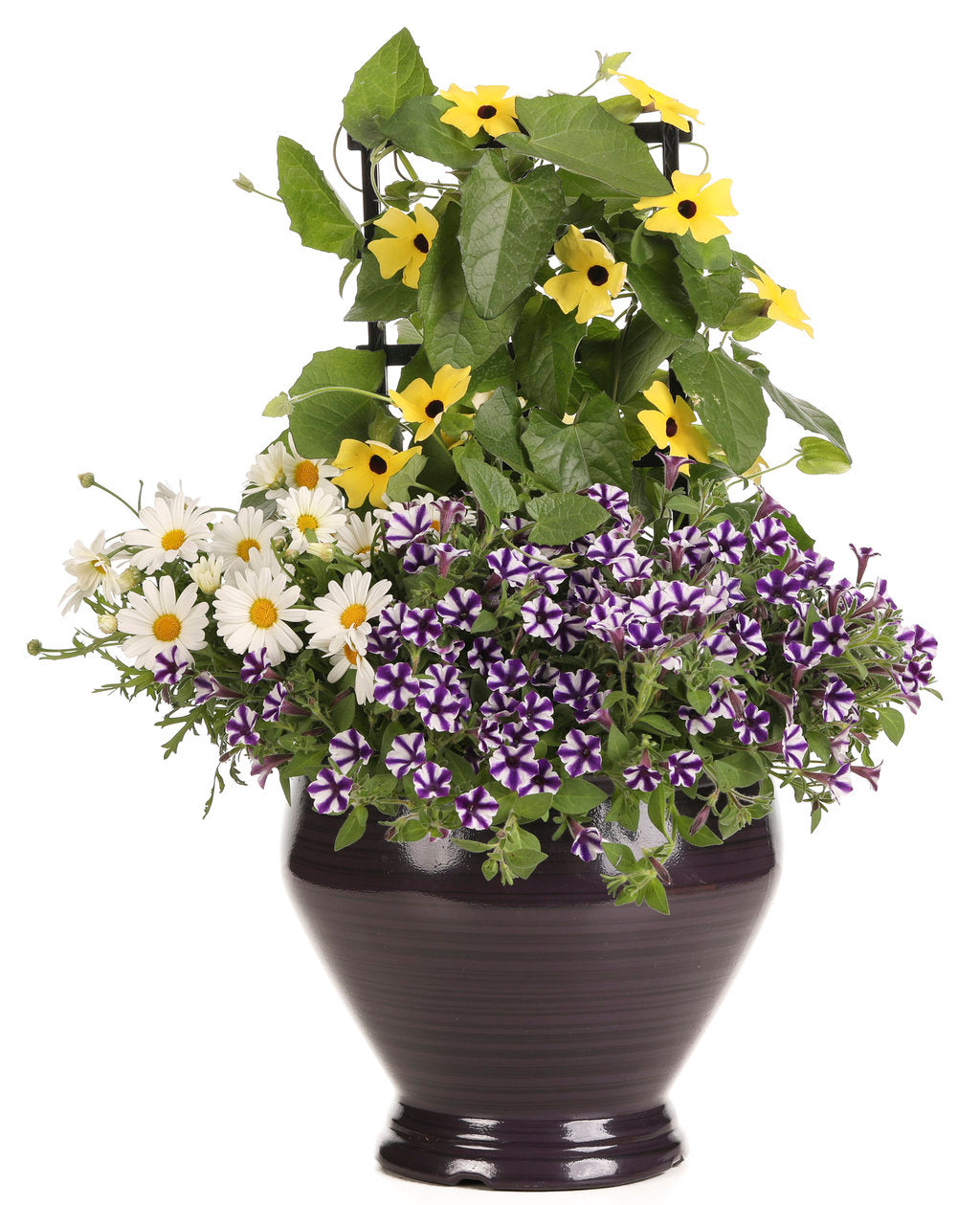 Supertunia Mini Vista® Violet Star | Proven Winners