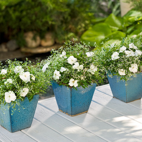 Infinity® White New Guinea Impatiens | Proven Winners
