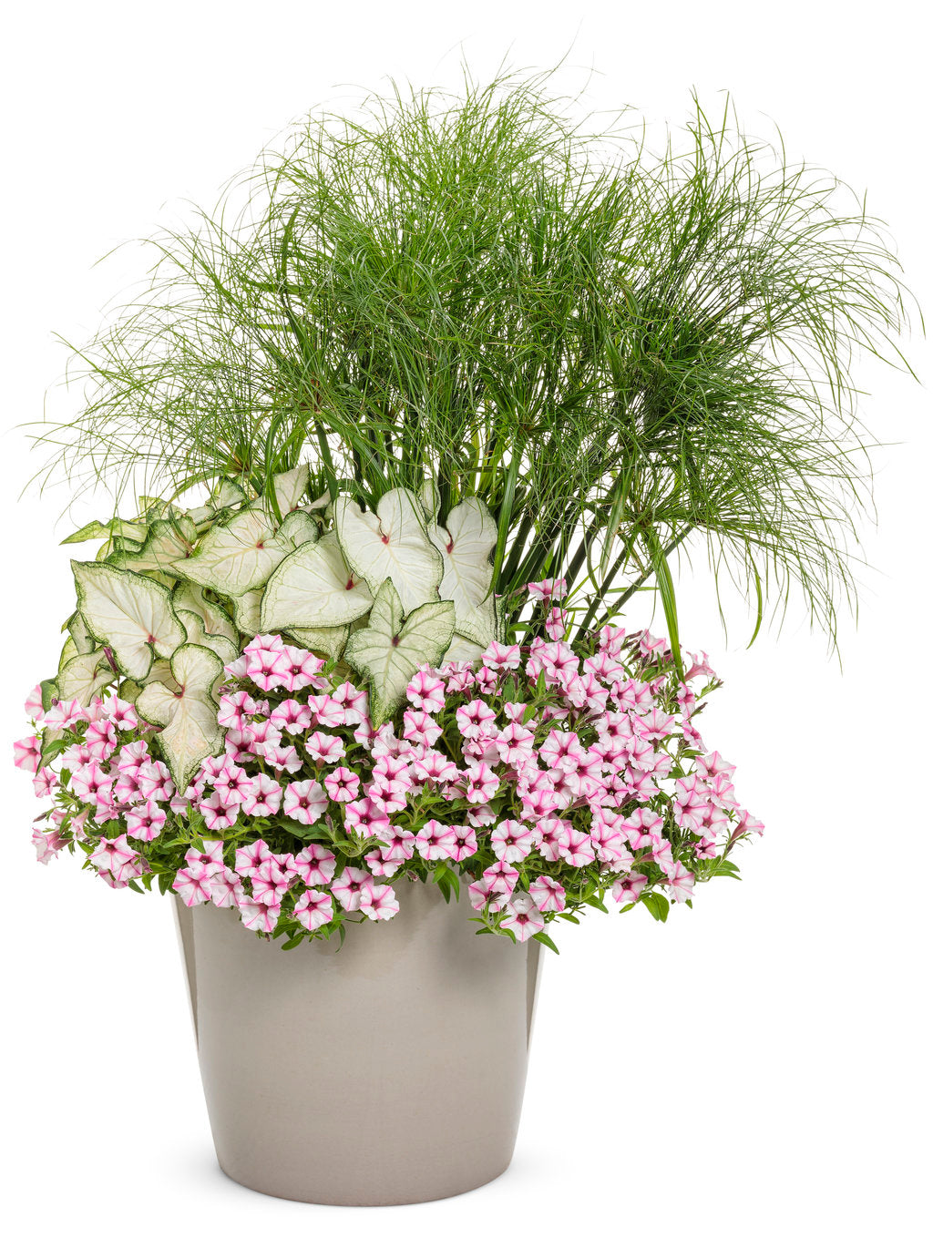 Supertunia Mini Vista® Pink Star | Proven Winners