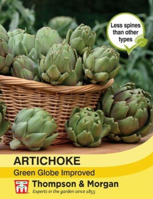 Artichoke 'Green Globe Improved' Seeds