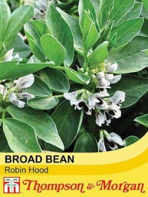 Broad Bean 'Robin Hood' Seeds