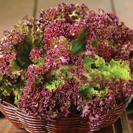 Lettuce 'Lollo Rossa' Seeds