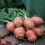 Carrot 'Paris Market 5 Atlas' Seeds