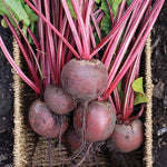 Beetroot 'Red Ace F1' Seeds