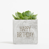 Birthday Succulent