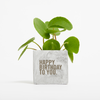 Birthday Money Plant