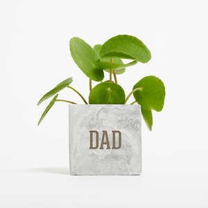 Father's Day Money Plant