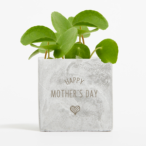 Mother's Day Money Plant