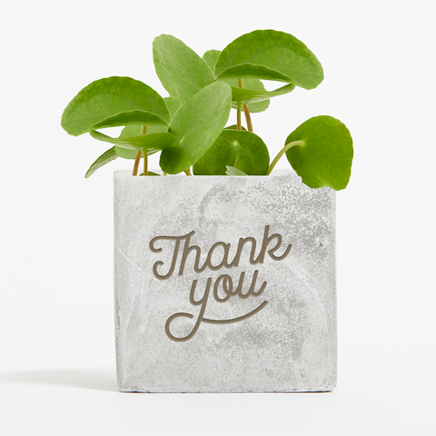 Thank You Money Plant