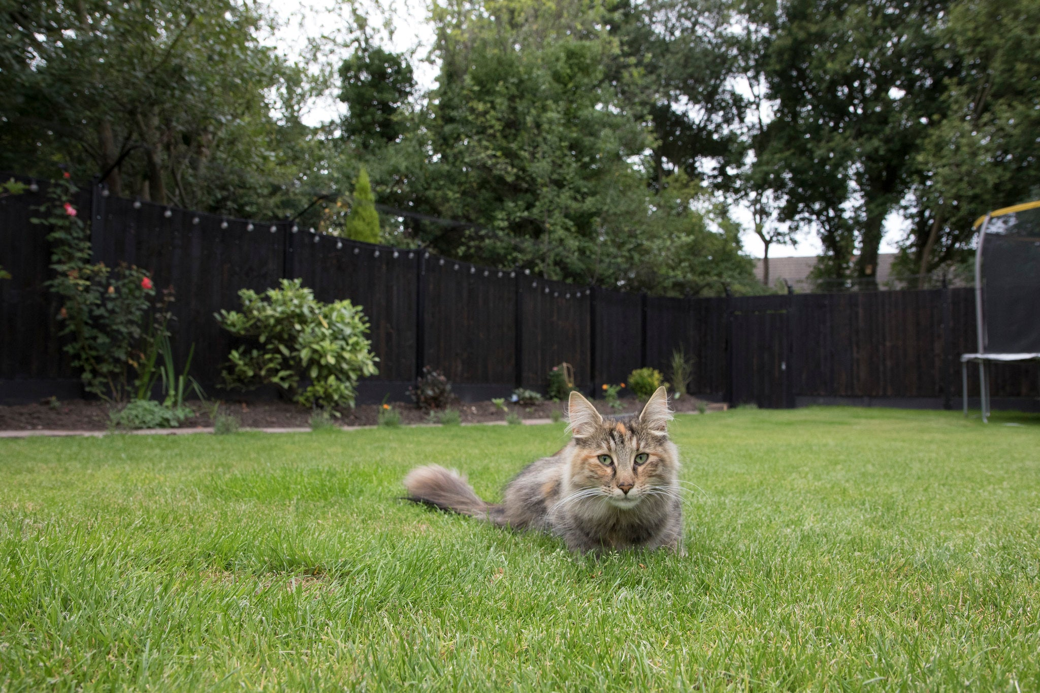 ProtectaPet Cat Fence Barrier