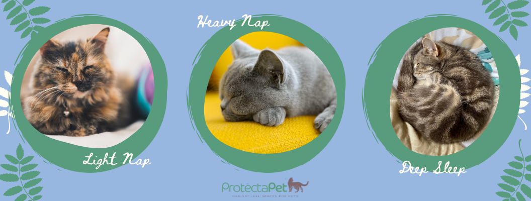 Different Types of Cat Sleeping Positions