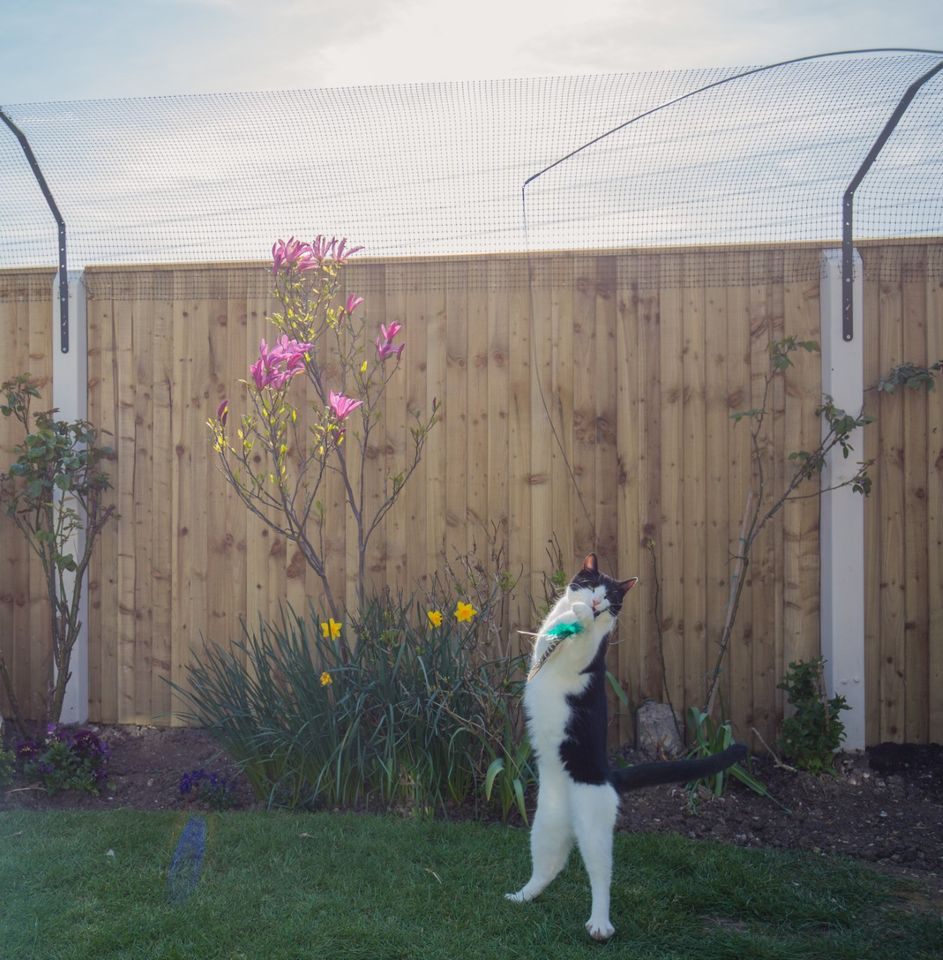 Cat enjoying an enriching outdoor environment with cat friendly toys and plants in the safety of ProtectaPet Cat Fence Barriers