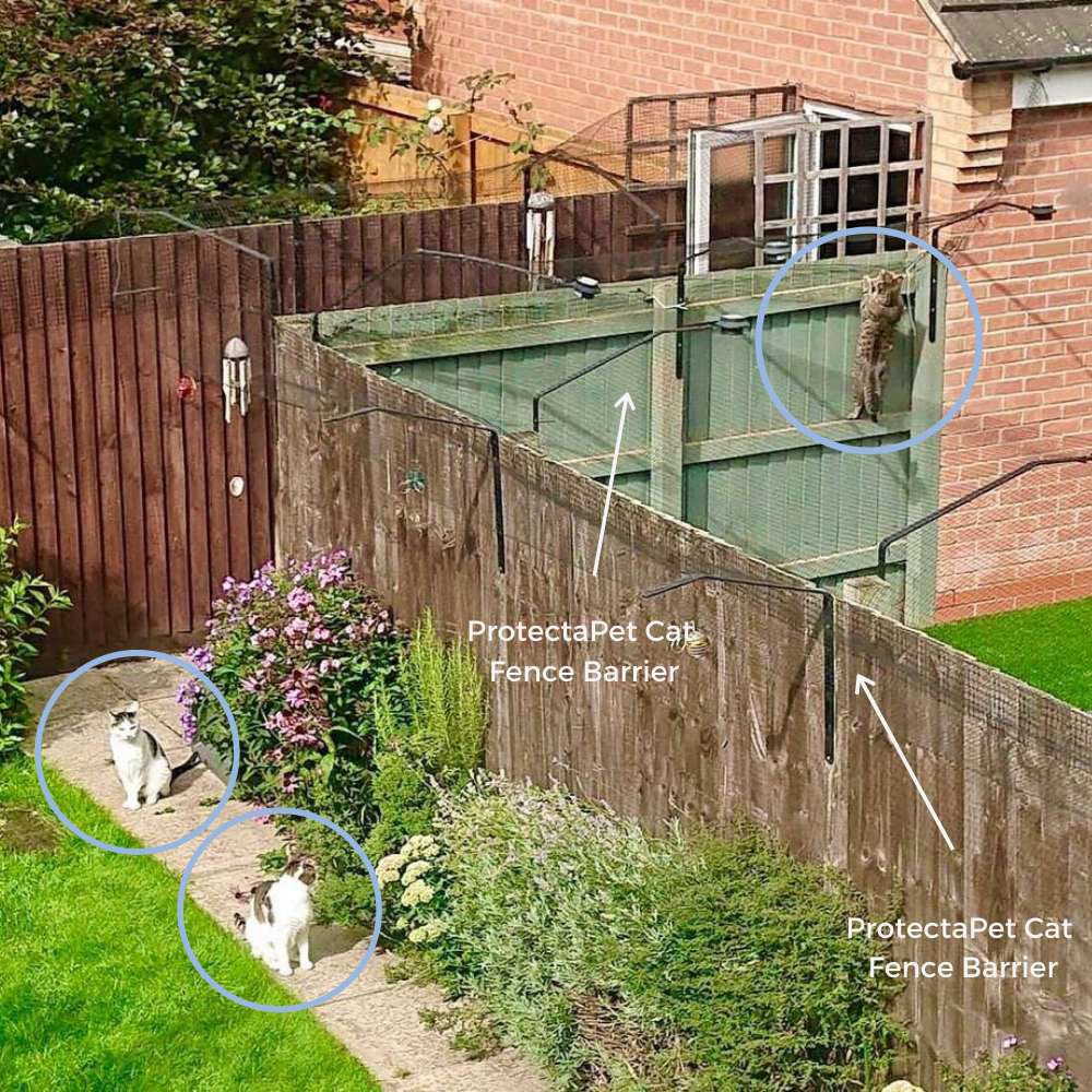 Neighbour goals! Pictured are two neighbouring gardens that both have ProtectaPet Cat Fence Barriers. You can see that the cat climbing is trying to enter the adjacent house but cannot due to the design of the barriers.