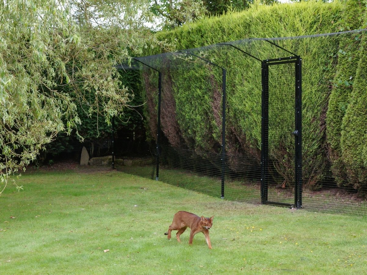 ProtectaPet Cat Enclosure Fencing infront of Hedge
