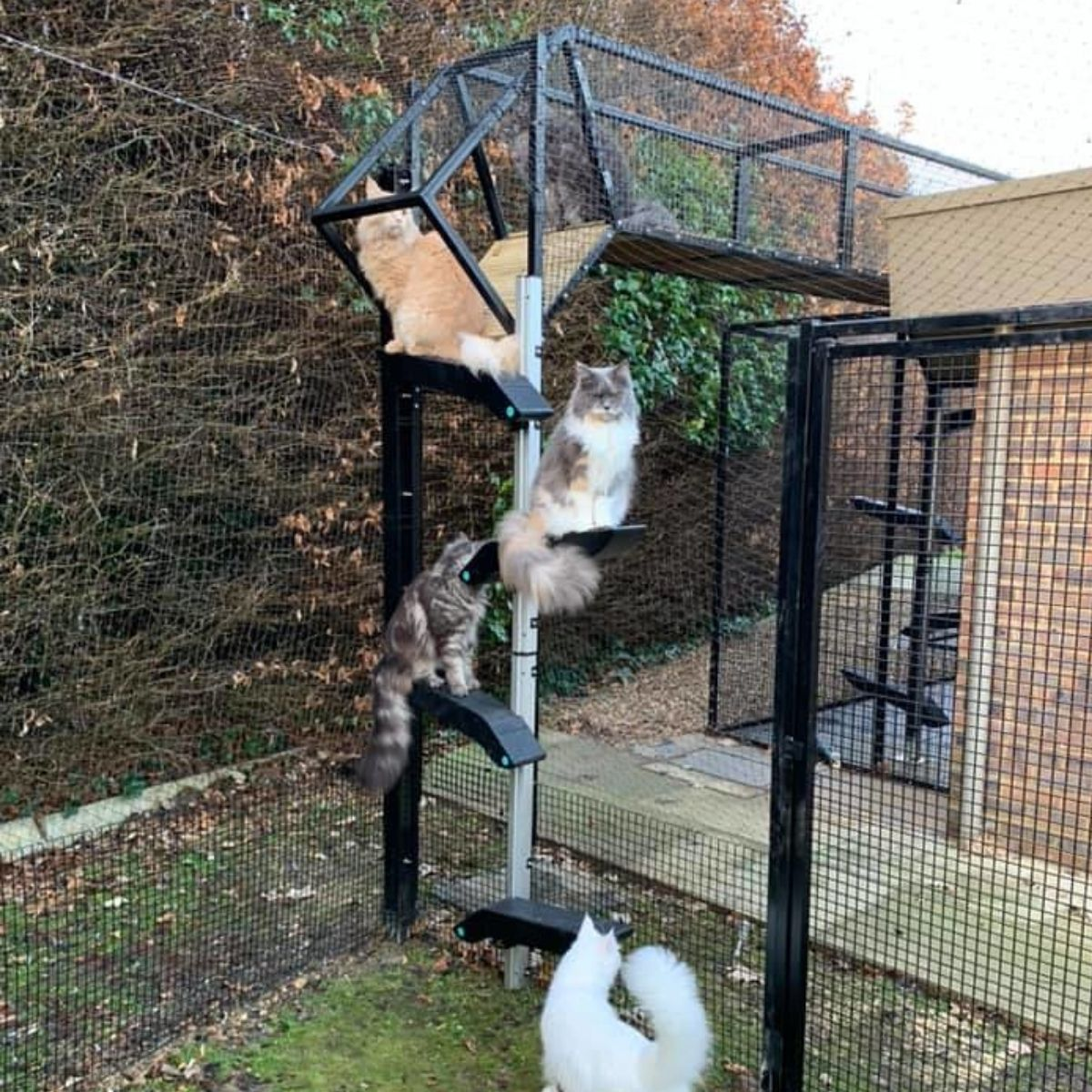 Cat Shelves leading to Catio Tunnels