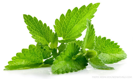 The Magical Effect & applications of peppermint essential oil