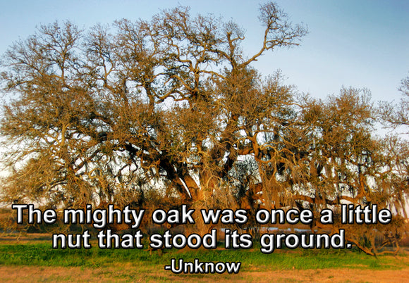 The Mighty Oak (PMT9102)