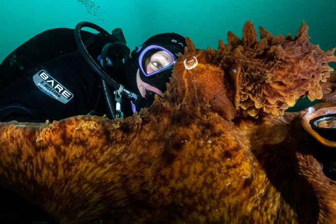 Interactions with a Giant Pacific Octopus