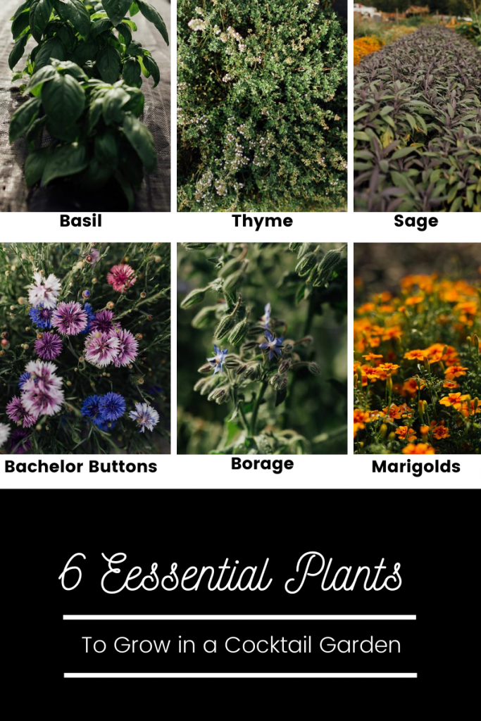 6 Essential Plants to Grow in a Cocktail Garden