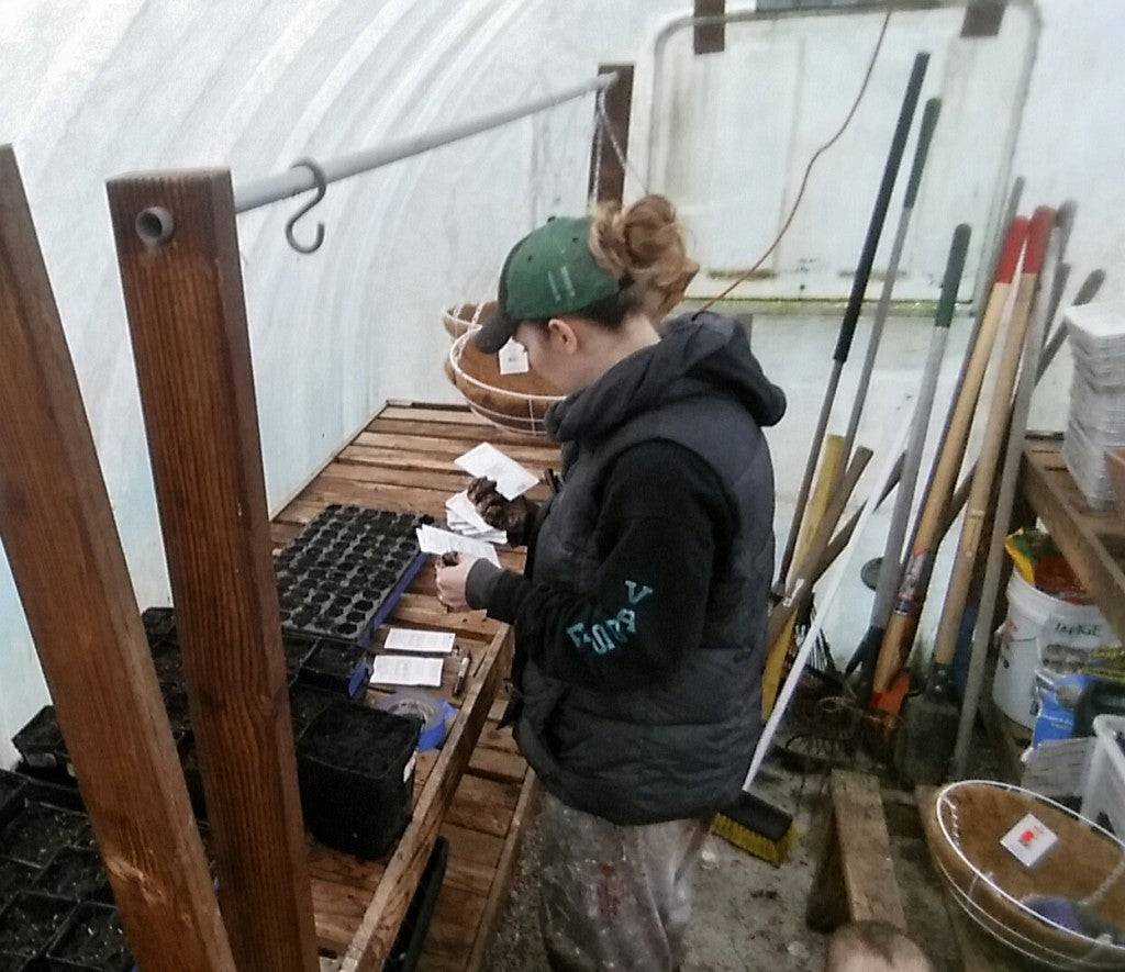 venise planting starts in the greenhouse at simple goodness farm