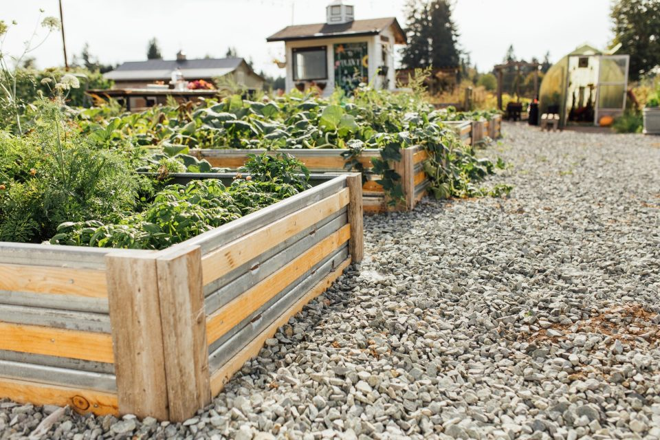 example of DIY raised beds for garden
