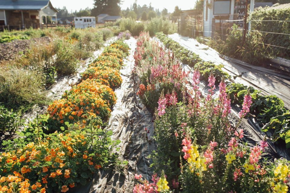 flower garden in the pacific northwest
