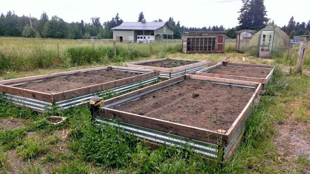Raised beds on the farm were built with aluminum siding and wood to save money on lumber and then filled to the brim with seeds