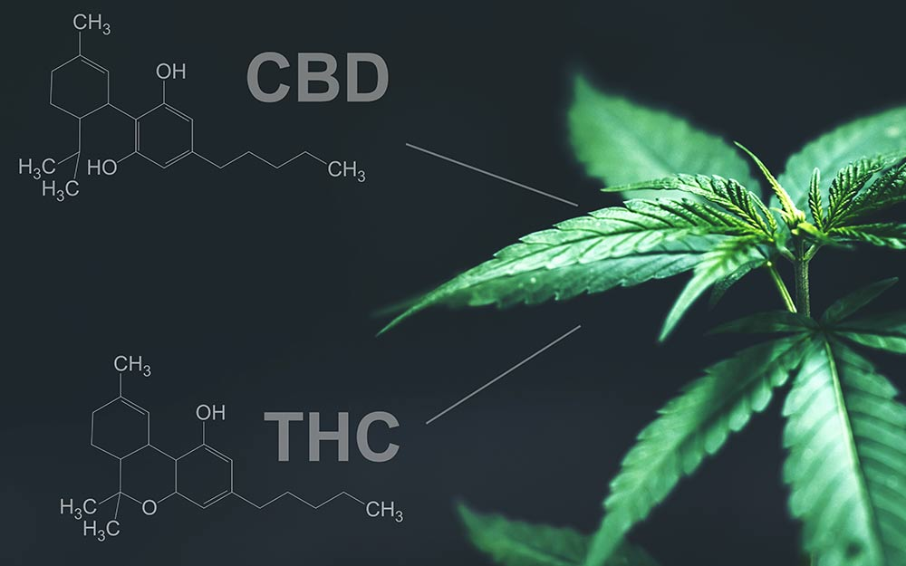 Can You Take Delta 8 And CBD Together?