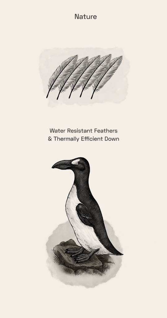 Nature: Water resistant feathers & thermally efficient down.