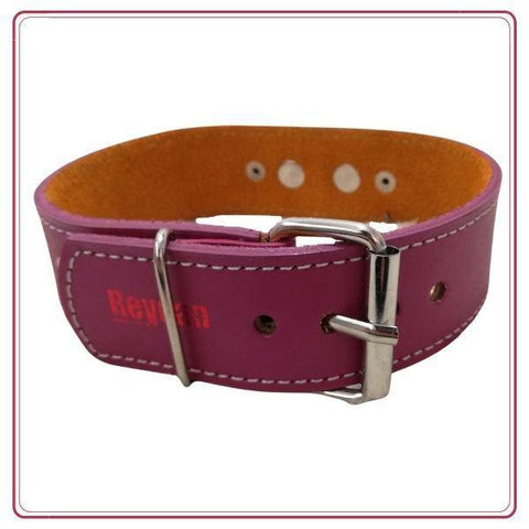 Collar de cuero REY Medium color Lila - Ohana Vet Store