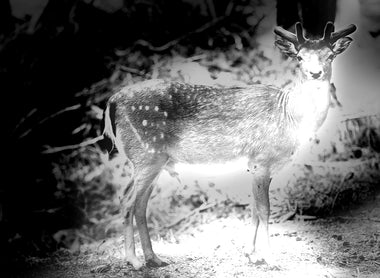 How to Choose the Best Night Vision Trail Cam