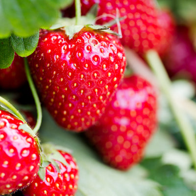 Top Five Soft Fruits to Grow at Home