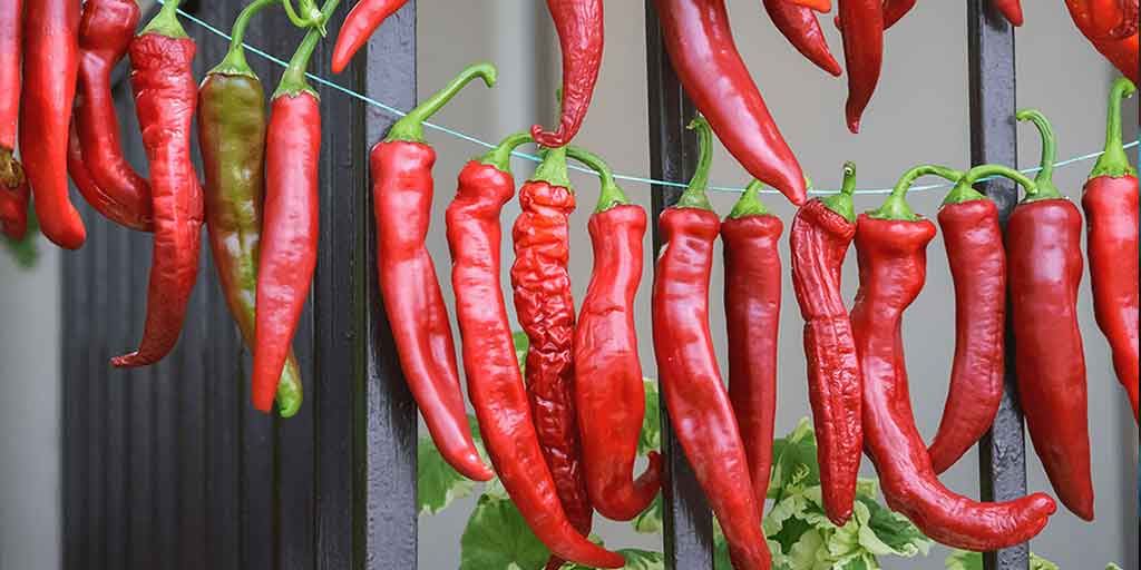 How to hang chillies