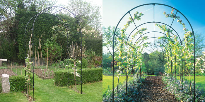 fruit tree arches