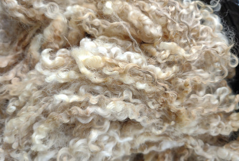 LEICESTER longwool raw wool per pound lamb from my USA local flock