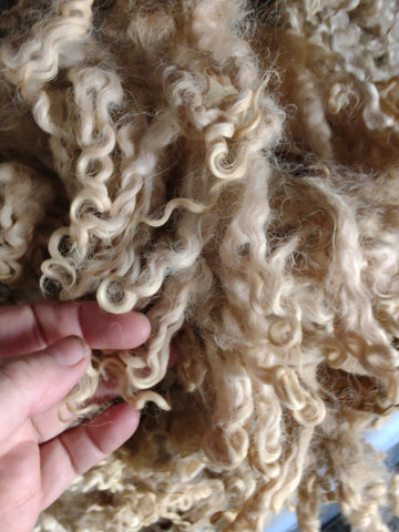 Raw wool grab bag pound wensleydale teeswater masham any mix nice pound raw