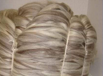 1lb Blue faced Leicester BFL PRALINE combed top ON ORDER