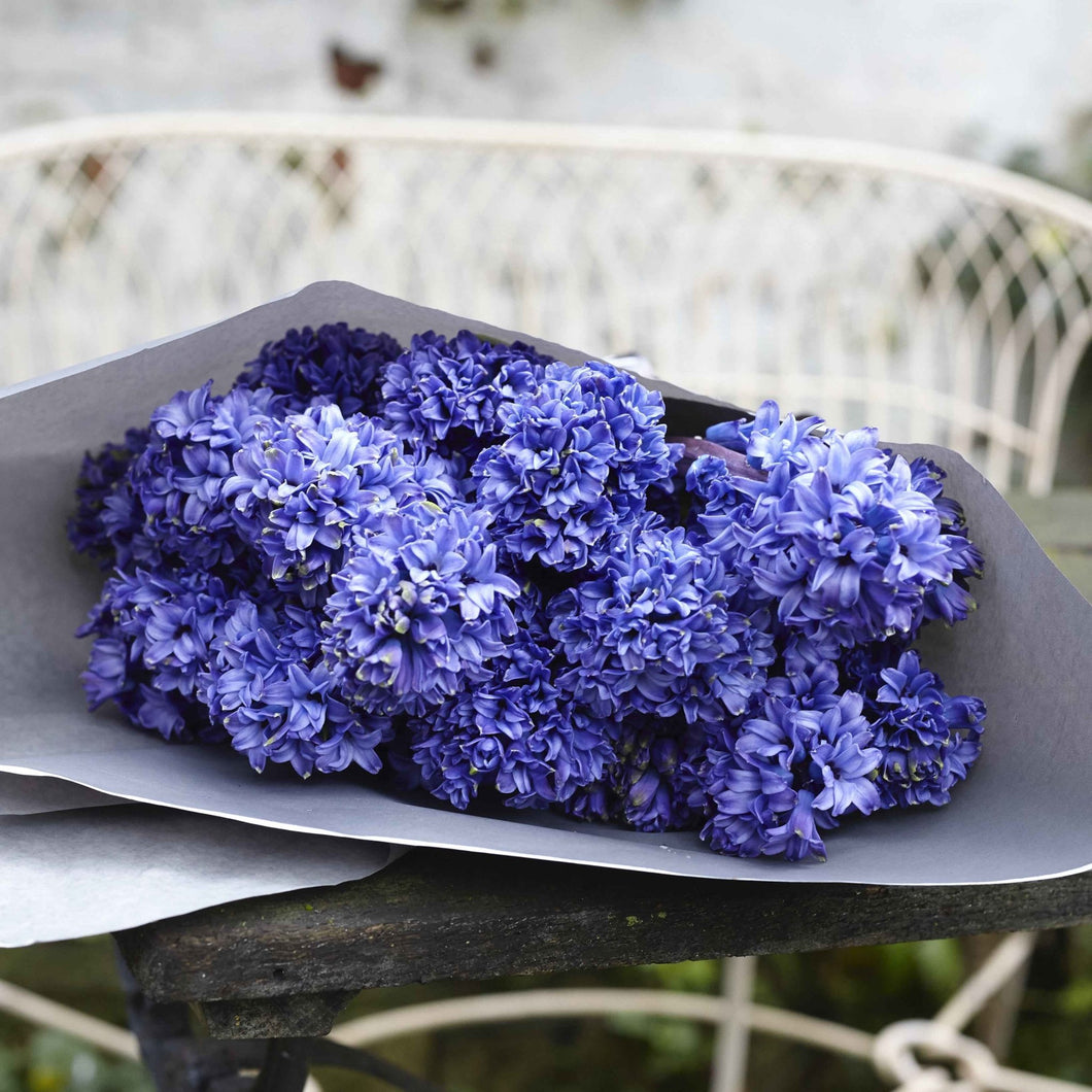 Hyacinths - Lucy Vail Floristry