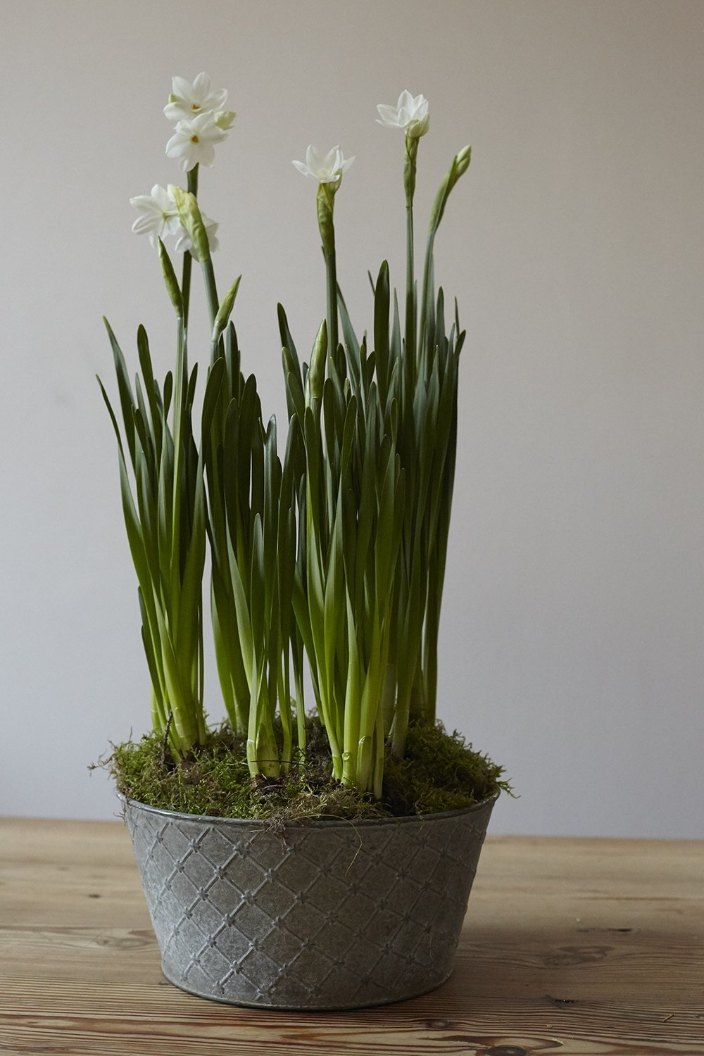 Paper White Planter - Lucy Vail Floristry
