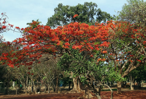 Which trees should you consider for a tree plantation drive in India? Treed Stories